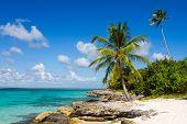 Palm Tree On The Tropical Beach, Saona Island, Caribbean Sea
