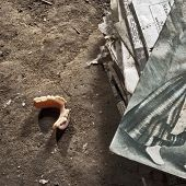 denture on the ground
