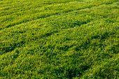 Newly mowed grass lawn