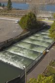 picture of fresh water fish  - Fish ladders and flowing fresh water Bonneville Oregon - JPG