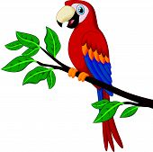 pic of parrots  - Vector illustration of Cartoon red parrot on a branch - JPG