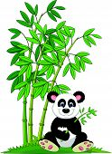 stock photo of panda  - Vector illustration of Cartoon panda sitting and eating bamboo - JPG