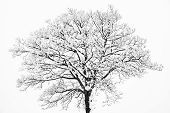 Frozen Snowy Trees And Branches In Freezing Winter Landscape