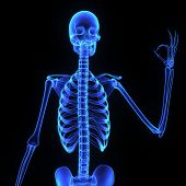 stock photo of skeleton  - A need for strength makes the bones rigid - JPG