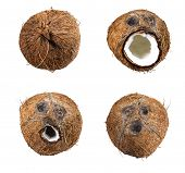 collection of  Coconuts set isolated on white background