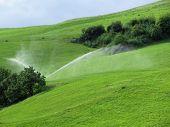 Ridge On Alpine Pasture With Grass Sprinklers
