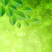 Spring green bokeh abstract light background with leaves.