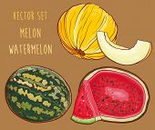 Vector Set With Fresh Melon And Watermelon