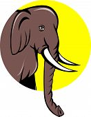 picture of tusks  - Illustration of an Indian elephant head with tusks viewed from side on isolated background set inside circle done in cartoon style - JPG