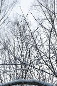Winter Tree Branches In Abstract Texture