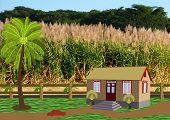 Cottage Near A Cane Field