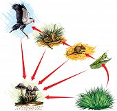 picture of flying-insect  - Vector illustration of food chain in nature - JPG