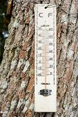 image of fahrenheit thermometer  - a thermometer mounted on a big tree - JPG