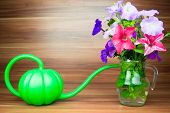 foto of petunia  - Colorful petunia blooms in a glass pitcher with watering can - JPG