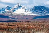stock photo of andes  - Autumn in Patagonia - JPG
