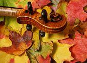 Violin Scroll Detail In  Autumn