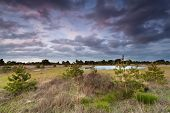 image of swamps  - beautiful sunset over coniferous swamp in Netherlands - JPG