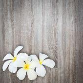 foto of frangipani  - Close up white and yellow frangipani flower on wood background - JPG