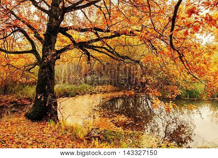 poster of Autumn landscape. Autumn nature view. Autumn cloudy landscape of old autumn oak tree near the pond in cloudy autumn weather - autumn colorful nature. Autumn colored landscape view of autumn forest