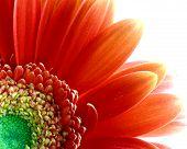 Flower_Divine