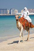 Kamel am Jumeirah Beach in Dubai, Vereinigte Arabische Emirate
