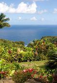 Lush Foliage At A Tropical Garden In Hawaii