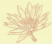 Editable vector illustration of a water lily flower