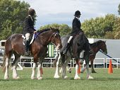 picture of clydesdale  - Two competitors mounted on Clydesadles waiting to be judged in the mounted class. There is another horse behind them being judged. Taken at the Horse of the Year 2007 Hastings New Zealand   - JPG