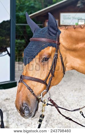 Beautiful Horse Heas Closeup With