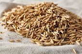 Pile Of Unpeeled Oat Grains On Homespun Tablecloth Background, Top View, Close-up, Macro, Selective  poster