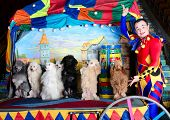 foto of parti poodle  - Smiling harlequin presents 7 standing dogs - JPG