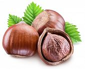 Hazelnuts, kernel of hazelnut and green leaves. Clipping path. poster