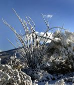 Nevado Ocotillo