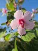 Pequeña rosa flores silvestres