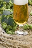 stock photo of bine  - beer glass with hop cones and barley malt - JPG