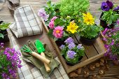 Garden Flowers And Plants In Flower Pots. Garden Equipment: Watering Can, Shovel, Rake, Gloves And A poster