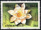 Nymphaea Cladstoniana