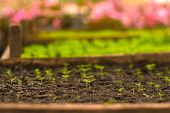 Growing Seedlings In Peat Pots. Plants Seeding In Sunlight In Modern Botany Greenhouse, Horticulture poster