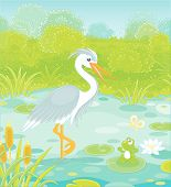 Big Grey And White Heron And A Small Green Frog On A Lake Among Cane, Grass And Bushes Of A Summer M poster