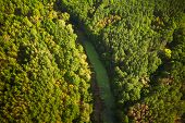 Aerial View Green Forest Woods And River Marsh Bog In Summer Landscape. Top View Of Beautiful Europe poster