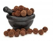 Sweetgum fruit herb used in traditional chinese herbal medicine in a black marble mortar with pestle