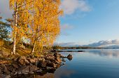 Autumn Birch Tree On The Stony Waterside Of The Saimaa Lake In Puumala Municipality. Southern Savoni poster