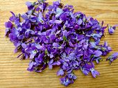 Violets Flowers Heap Pile On Wooden Table. Wild Common Violet Flowers (wood, Sweet, English Or Garde poster