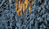 Russia. The South Of Western Siberia. Frosty Sunset In Mountain Altai. poster