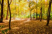 Autumn Forest In The Sunlight Rays. Autumn Picturesque Background. Forest With Mist And Sunlight. poster