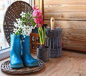 Sprig Of Flowering Cherry In A Dark Blue Rubber Knee-boot. Seasonal Flowering Of Balcony
