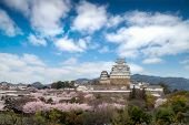 Cherry Blossom Flowers Season During Spring Season With Himeji Castle And Nice Sky Cloud In Himeji C poster