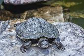 turtle the sun