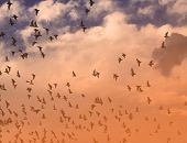 Flock Of Warning