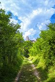 The Path Leading The Old Castle Beckov. The Old Castle Of Slovakia Beckov.beckov Castle Ruins, Slova poster